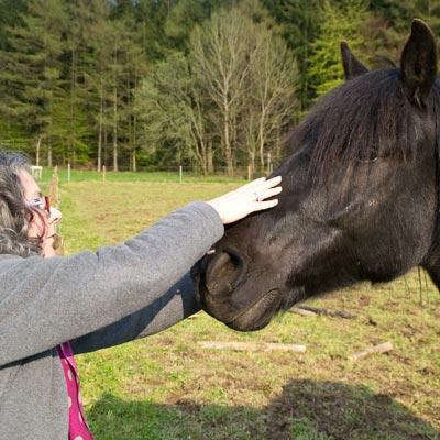Pferde-Behandlung-DSC_1234_400x400